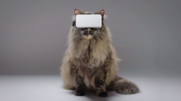 VR for cat